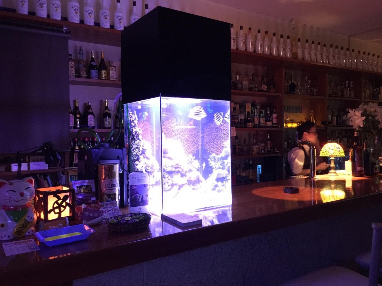 沖縄市美里マリブの水槽1海水魚、熱帯魚