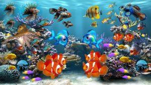 アクアリウムは癒しと安らぎを与えるセラピー効果を期待できます。沖縄熱帯魚画像1