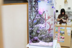 琉球ガラス匠工房恩納店、水槽設置店内風景